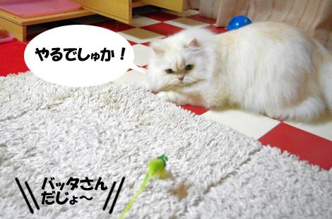 2011031902.jpg