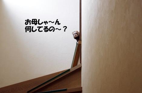 2011032203.jpg