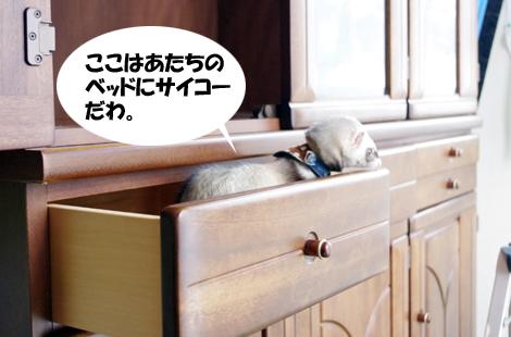 2011032204.jpg