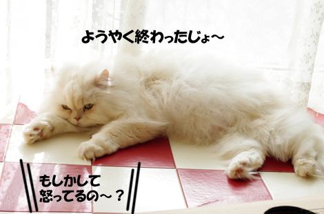 2011032408.jpg