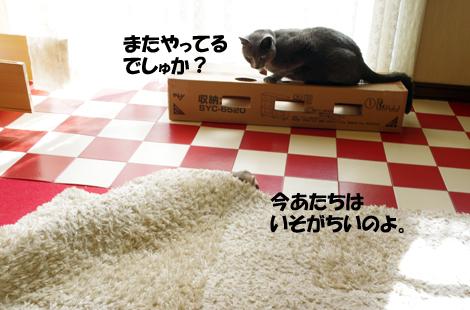2011032501.jpg