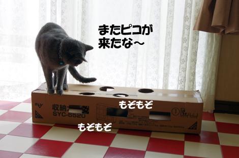 2011032603.jpg