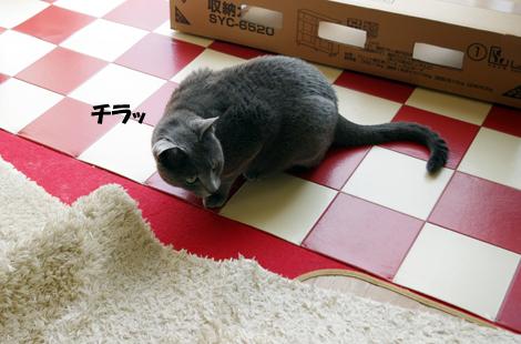 2011032702.jpg