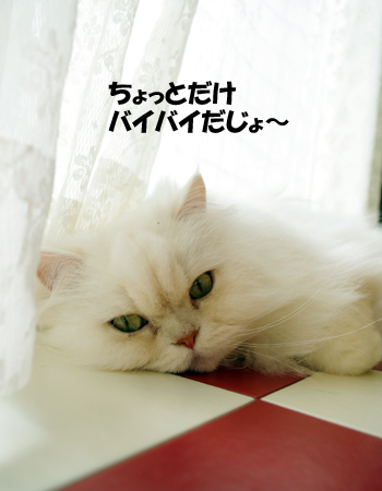 2011032805.jpg