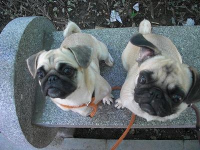 餌待ちの2匹(公園で)