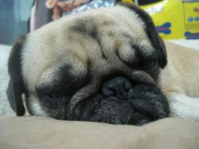 NyuNyuの寝顔