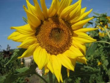 IMG_1373_convert_20081101163103.jpg