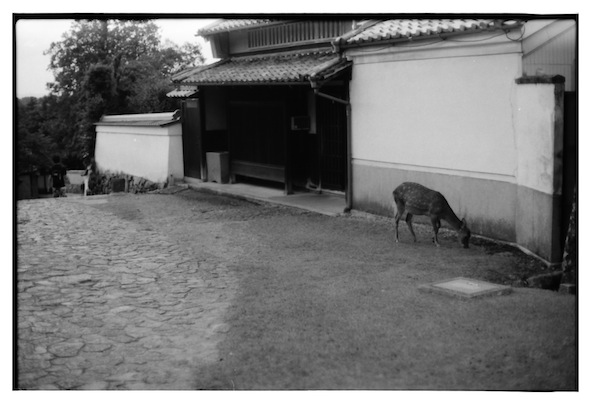 toudaiji2010_4.jpg