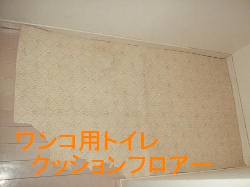 PO20110212_0035.jpg