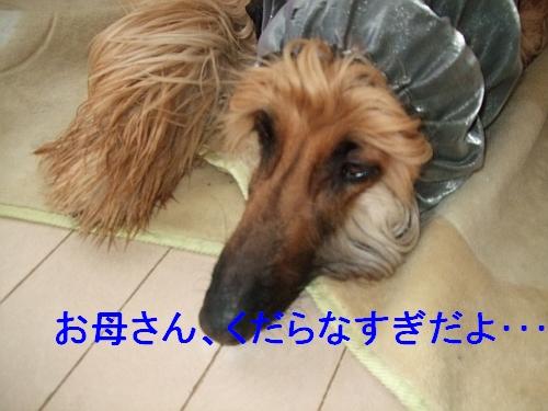 PO20110215_0002.jpg