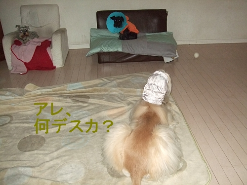 PO20110302_0010.jpg