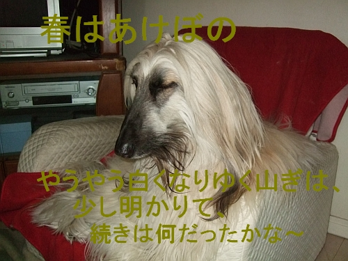 PO20110321_0010.jpg