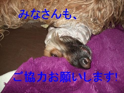 PO20110322_0001.jpg