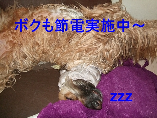 PO20110322_0002.jpg