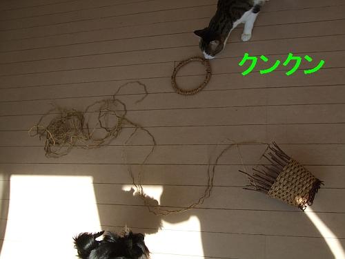 PO20110330_0000.jpg