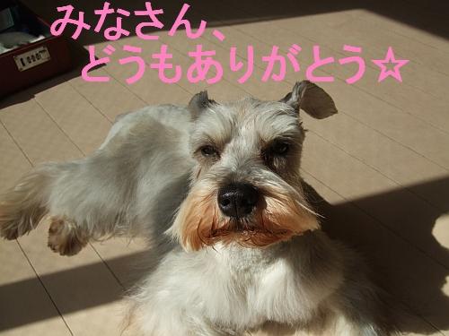 PO20110330_0009.jpg