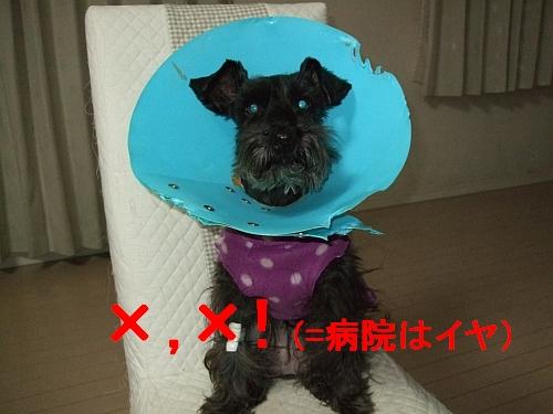 PO20110417_0000.jpg
