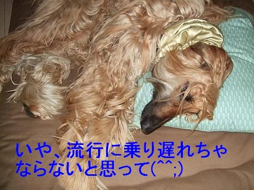 PO20110417_0009.jpg