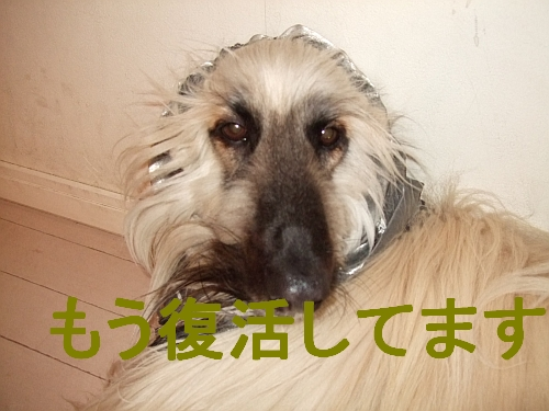 PO20110417_0019.jpg