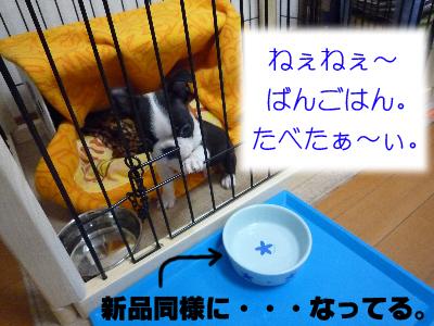 P1000724_S400-300.jpg