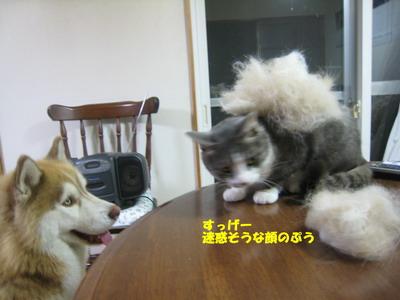 IMG_8006ぷう