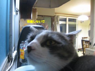 IMG_8898ぷう