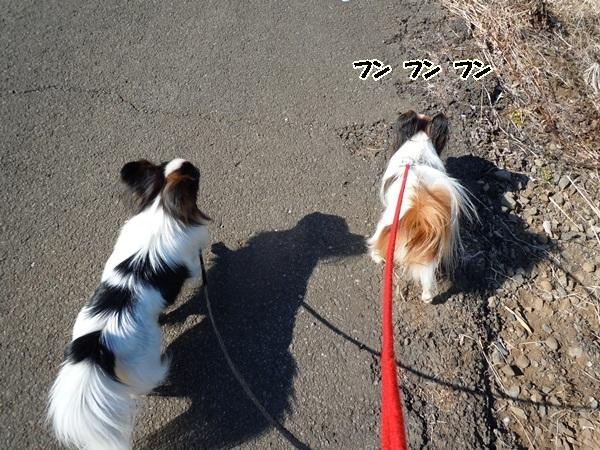 お山の散歩DSCN0558