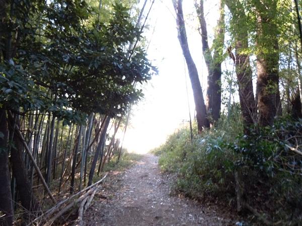 お山の散歩DSCN0569
