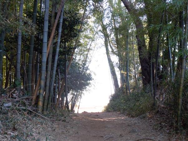 お山の散歩DSCN0567
