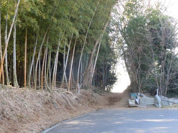 お山の散歩DSCN0565