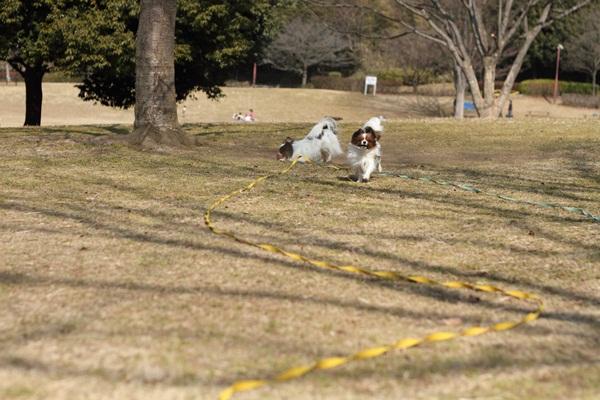 20110207 ふるさと公園DPP_0006