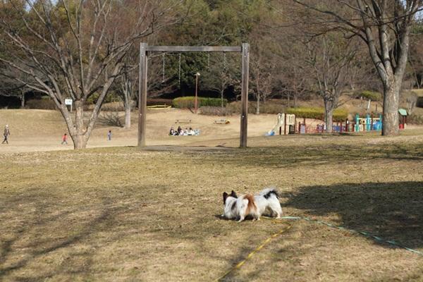20110207 ふるさと公園DPP_0020