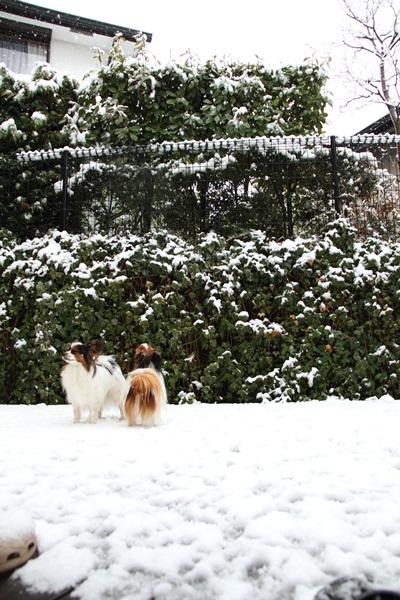 春の雪DPP_0022