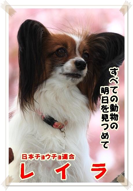河津さくら ワンコ編 アップ用DPP_0036