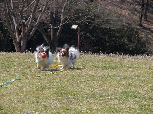 2011_03_29 玉縄さくら DSCN0867