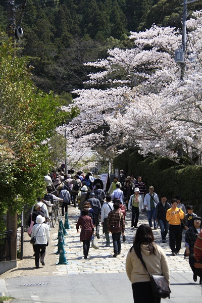2011_4_10 京都の桜_MG_4363
