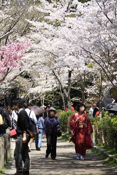 2011_4_10 京都の桜_MG_4372
