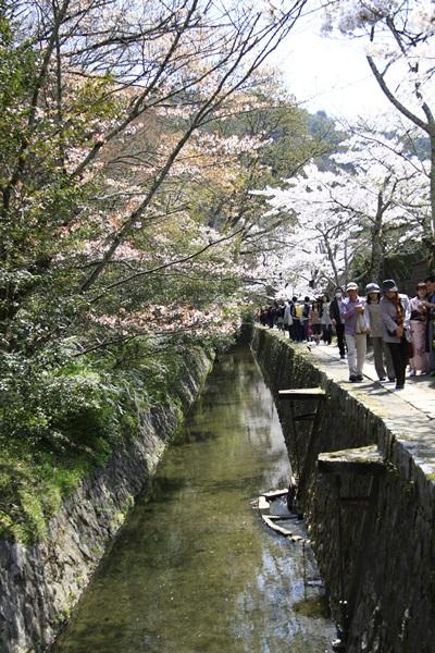 2011_4_10 京都の桜_MG_4379