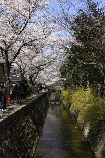2011_4_10 京都の桜_MG_4374