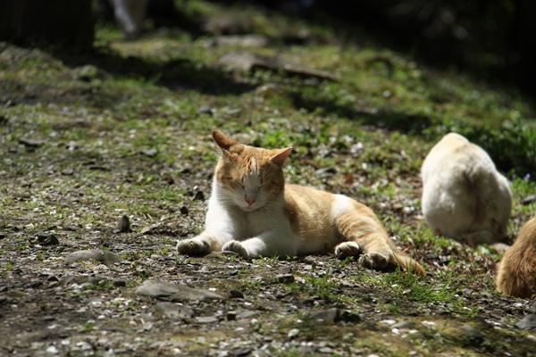 2011_4_10 京都の桜_MG_4370