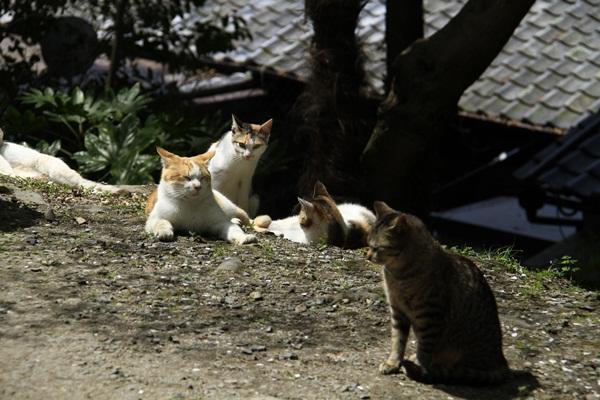 2011_4_10 京都の桜_MG_4366