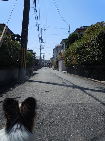2011_04_14 宝塚ガーデンフィールズDSCN0959