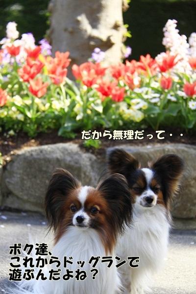 2011_04_14 宝塚ガーデンフィールズ_MG_4414