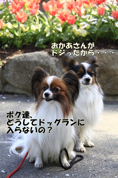2011_04_14 宝塚ガーデンフィールズ_MG_4413