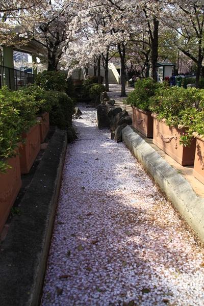 2011_04_14 宝塚ガーデンフィールズ_MG_4426
