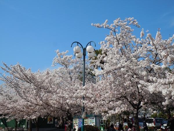 2011_04_14 宝塚ガーデンフィールズDSCN0970