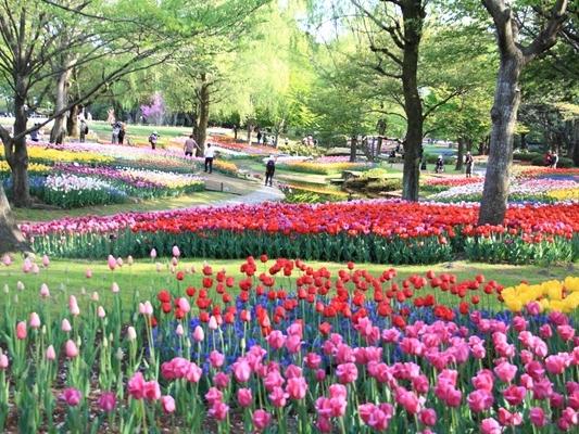昭和記念公園 ブログサイズ2011_04_25 昭和記念公園 アルバムDPP_0273