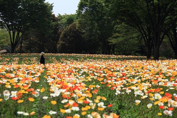 昭和記念公園 ブログサイズ2011_04_25 昭和記念公園 アルバムDPP_0005