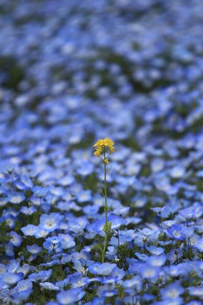 昭和記念公園 ブログサイズ2011_04_25 昭和記念公園 アルバムDPP_0046