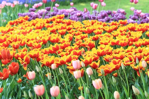 昭和記念公園 ブログサイズ2011_04_25 昭和記念公園 アルバムDPP_0088